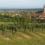 F68.Vignoble et Bergheim               vineyard and village of B
