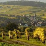 F68.Vignoble de Rorschwihr                  Rorschwihr vineyard