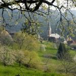 F68.Village de Thannenkirch avec cerisier en fleurs