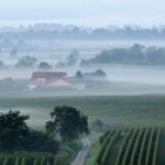 F68.Ferme sous la brume environ de Bergheim                farm